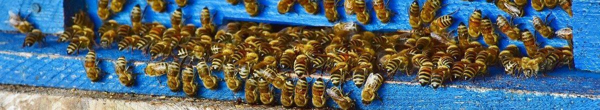 Bienenzuchtverein Much